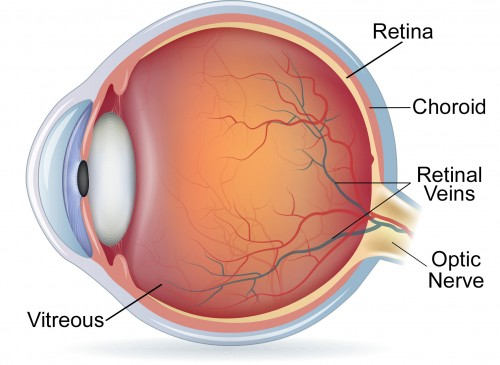What is the Retina? | Review of the Retina