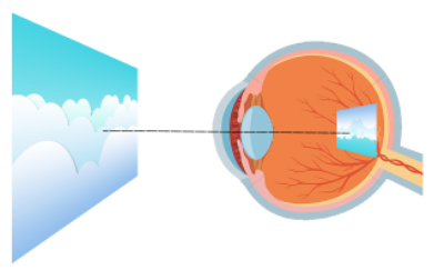 how the retina works